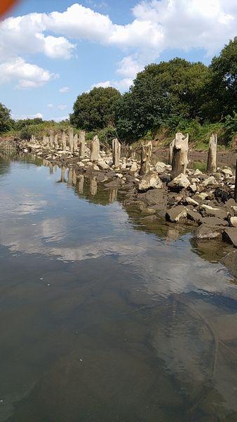 江戸川 引き潮