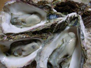 岩牡蠣を食べる