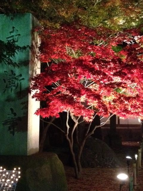 東漸寺のライトアップ