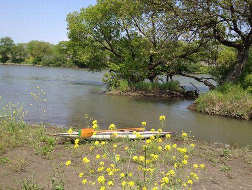 春うららか 江戸川カヌー