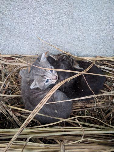 3匹の猫神さまと3匹の子猫のはなし