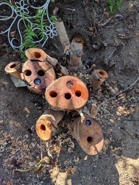 木を枯らす